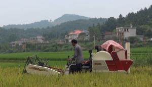 沃得迅龍水稻收割作業視頻(二)