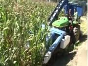 玉米联合收割机的使用和维护-玉米结构与装配