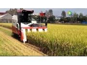 洋馬AG7114R水稻收割機作業視頻