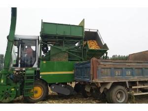 金大丰自走式穗茎兼收玉米收获机