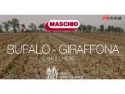 馬斯奇奧BUFALO-GIRAFFINA秸稈粉碎機作業視頻