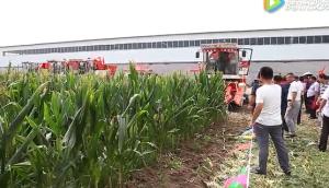 山东国丰4YZP-4EI自走式玉米收获机