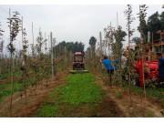 中農博遠9GS系列果園割草機作業視頻