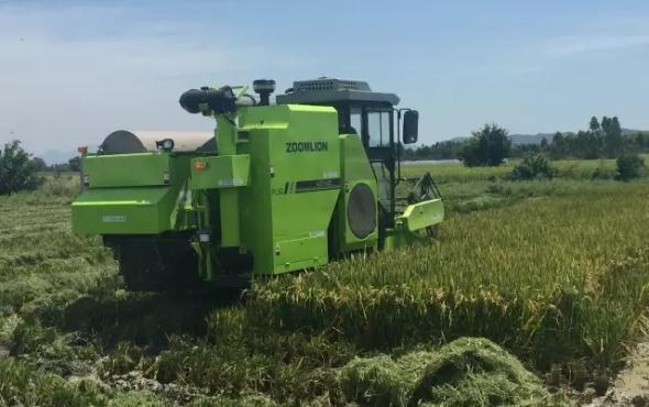 早稻開鐮 谷王上陣——極光綠PL50水稻機