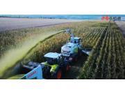 科乐收JAGUAR 900青贮收获机作业视频