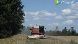 麥考密克收獲機收獲含有大量雜草的小麥