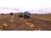 SIMAX公司TR3002牽引式南瓜籽收獲機-作業視頻