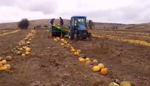 SIMAX公司TR3002牵引式南瓜籽收获机-作业视频