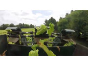 Triple B農場煙草收獲場景-作業視頻