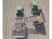 top air农场大型洋葱收获机作业航拍-作业视频