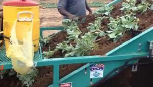 Shuknecht公司蔬菜秧苗起收機-作業視頻