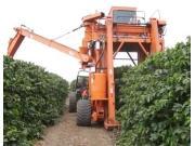 巴西农场机械化收获咖啡豆视频-作业视频