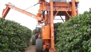 巴西農場機械化收獲咖啡豆視頻-作業視頻