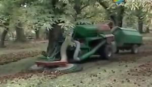 FACMA公司自走式坚果收获机-作业视频