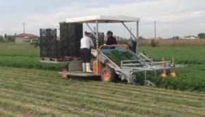 ORTOMEC公司小型自走式香菜收獲機-作業視頻
