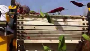 Sweere公司自走式单行辣椒收获机-作业视频