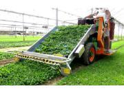 ORTOMEC公司8400electro自走式菠菜收获机-作业视频