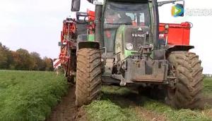 迪沃夫GBI GBII具有儲料斗的胡蘿卜收獲機