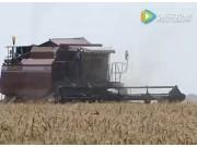 戈梅利聯合收割機麥收作業