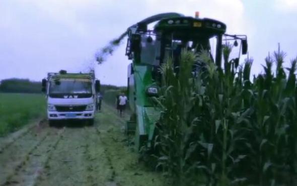 迪马牧王穗茎兼收机作业视频