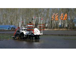 洋马VP系列高速乘坐式插秧机作业视频