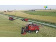 凱斯7130和8230收割機收割水稻作業