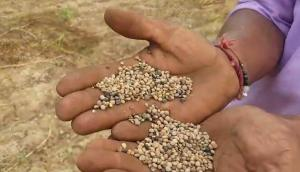 PUNNI公司自走式大豆收獲機
