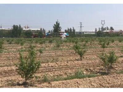 植保無人機桃樹葉面肥噴灑