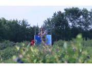 HAVEN公司自走式藍莓收獲機
