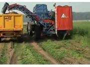 阿薩利公司T-250B胡蘿卜收獲機