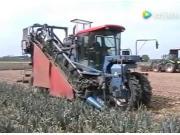 阿萨利公司SP-100PO韭葱收获机作业视频