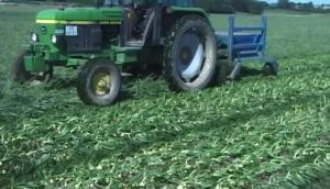 阿薩力OT1500洋蔥收獲機