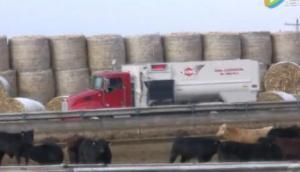 库恩RC200系列商用级饲料搅拌机作业视频