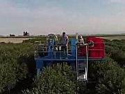 Blueline公司浆果收获机作业视频