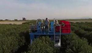 Blueline公司漿果收獲機作業視頻