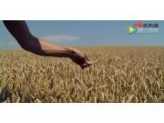 爱科SunFlower品牌讲述视频
