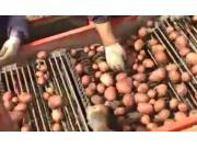 IMAC公司马铃薯收获机作业视频