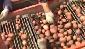 IMAC公司馬鈴薯收獲機作業視頻