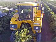 Riverina酒庄葡萄收获航拍视频