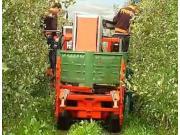 PIUMA公司4WD苹果收获机作业视频