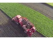 荷馬SP自走式甜菜收獲機作業視頻
