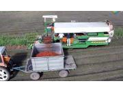 Guaresi公司DS40番茄收获机视频