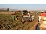 THV公司800-ST番茄收获机作业视频