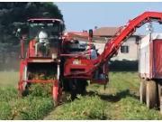 Corima公司自走式番茄收获机作业视频