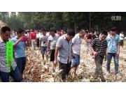 花溪玉田4YGT-4玉米籽粒割台作业视频