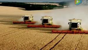多臺科樂收(CLAAS)LEXION收割機同時收割小麥視頻