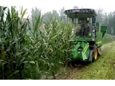 金大丰4YZP-3A玉米收获机视频
