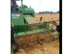 金大丰水稻机收割倒伏小麦演示视频