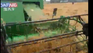 金大豐水稻機收割倒伏小麥演示視頻
