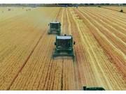 金大丰小麦收割机现场演示视频